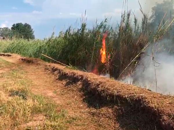 Un nuevo incendio arrasa en alzira una zona de ca ares junto al r o x quer - Librerias en alzira ...
