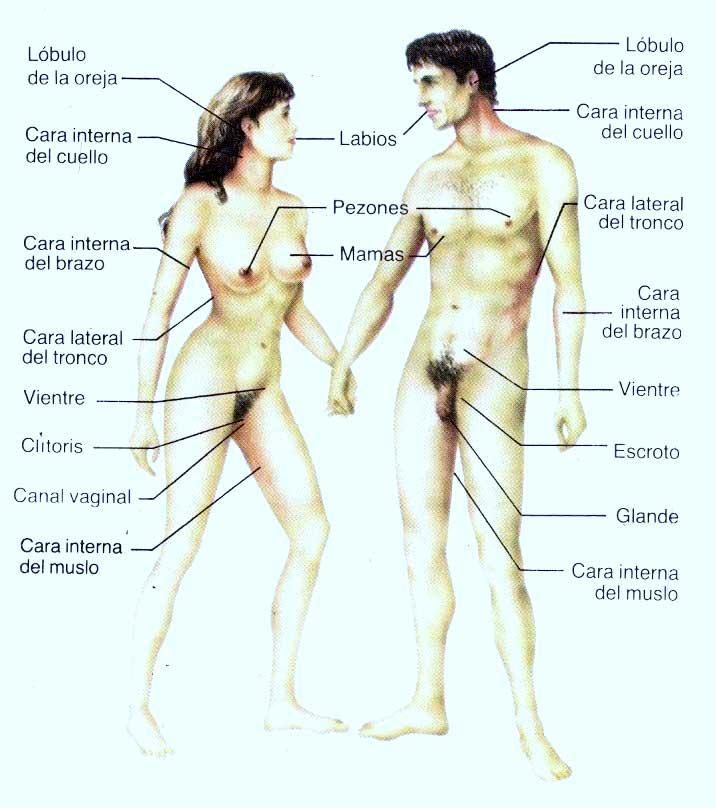 zona erogenas del hombre: